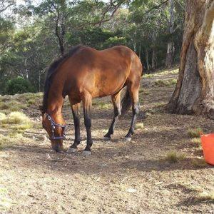 Horse-Reggie