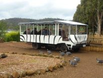 zoodoo-wildlife-park-safari-bus1